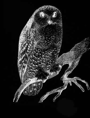 Andrew Carter - Le Sauvage American - Owl